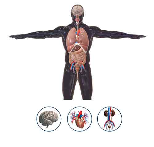 Human Anatomy 3D | Digital Teacher