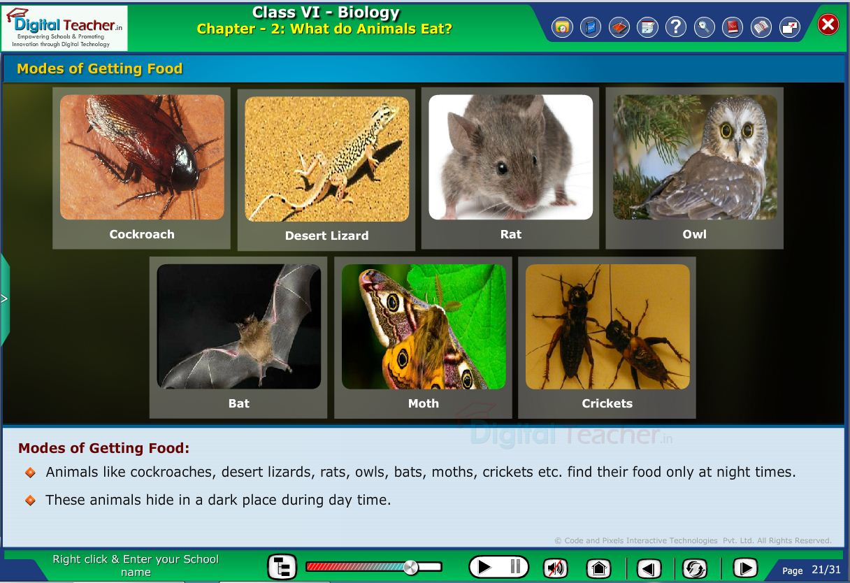 Digital teacher smart class you how different animals getting their own food