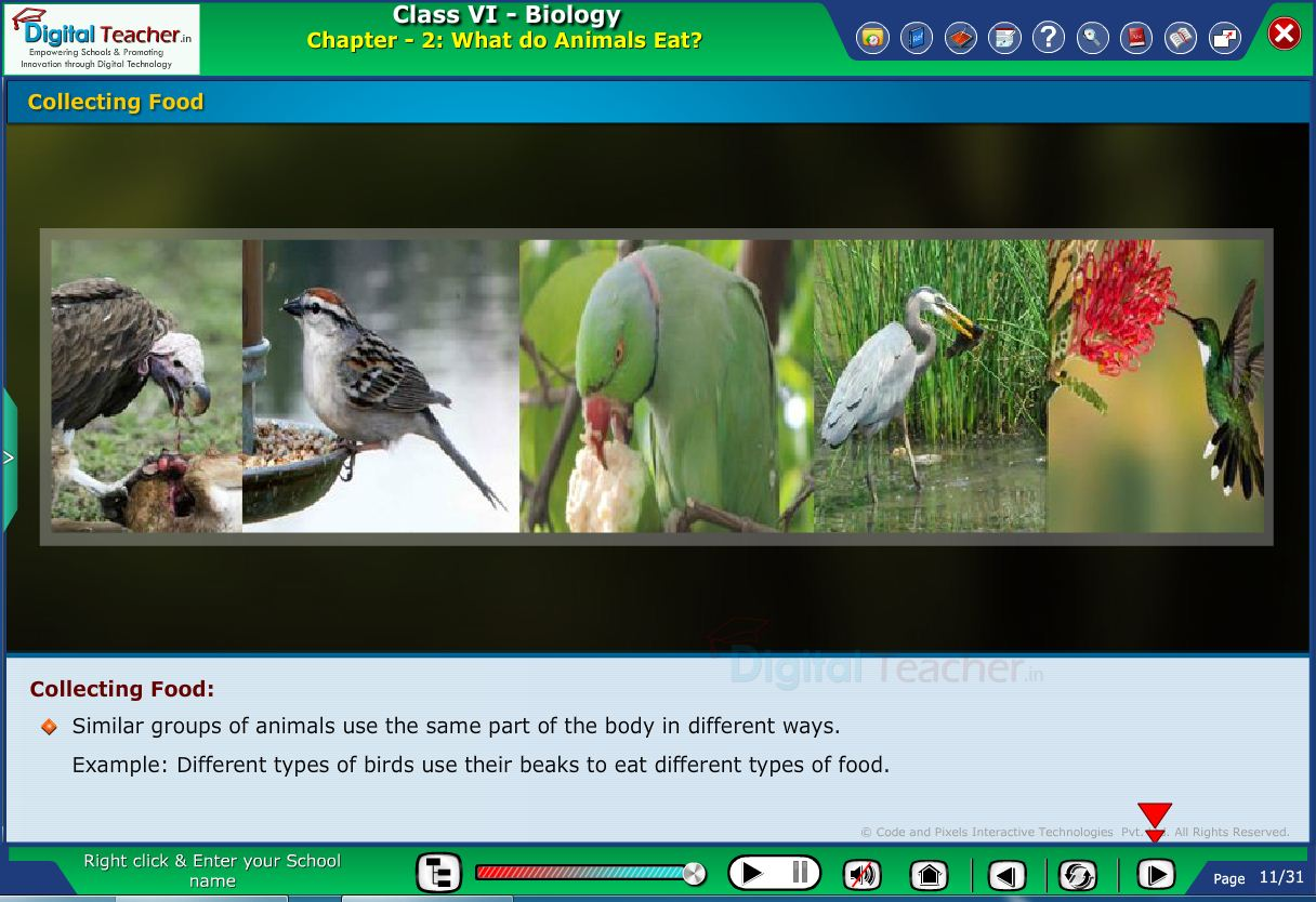 Digital teacher smart class about how birds collect their food