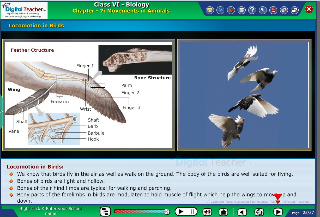Digital teacher smart class locomotion in birds