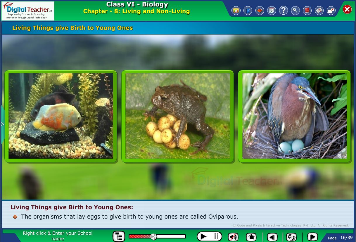 Digital teacher smart class about living things give birth to young ones