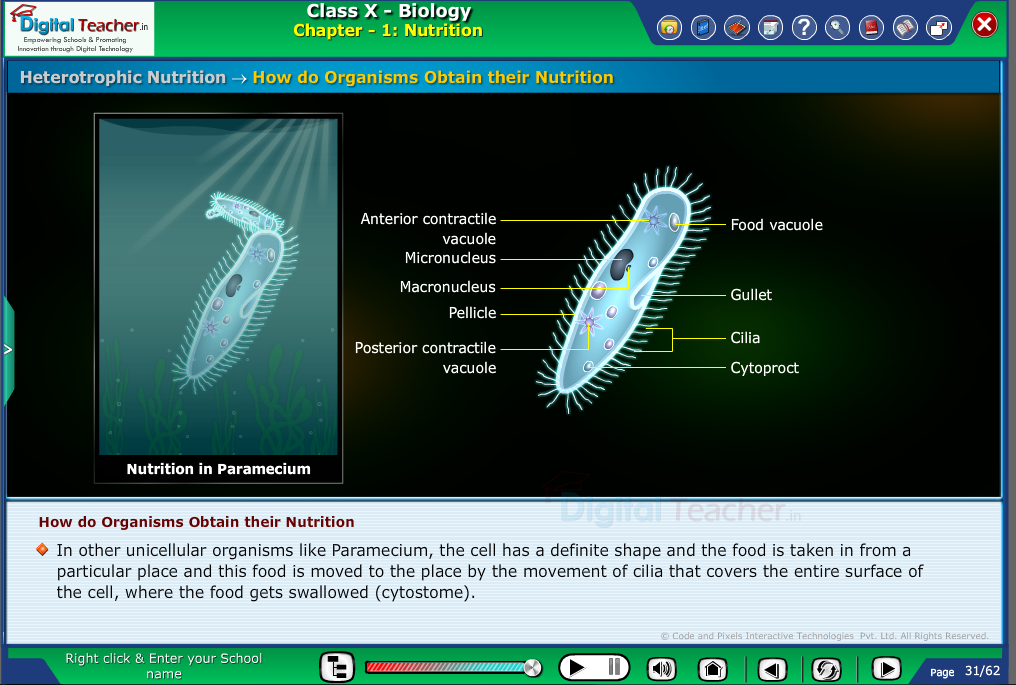Digital teacher smart class explanation on how do organisms obtain their nutrition