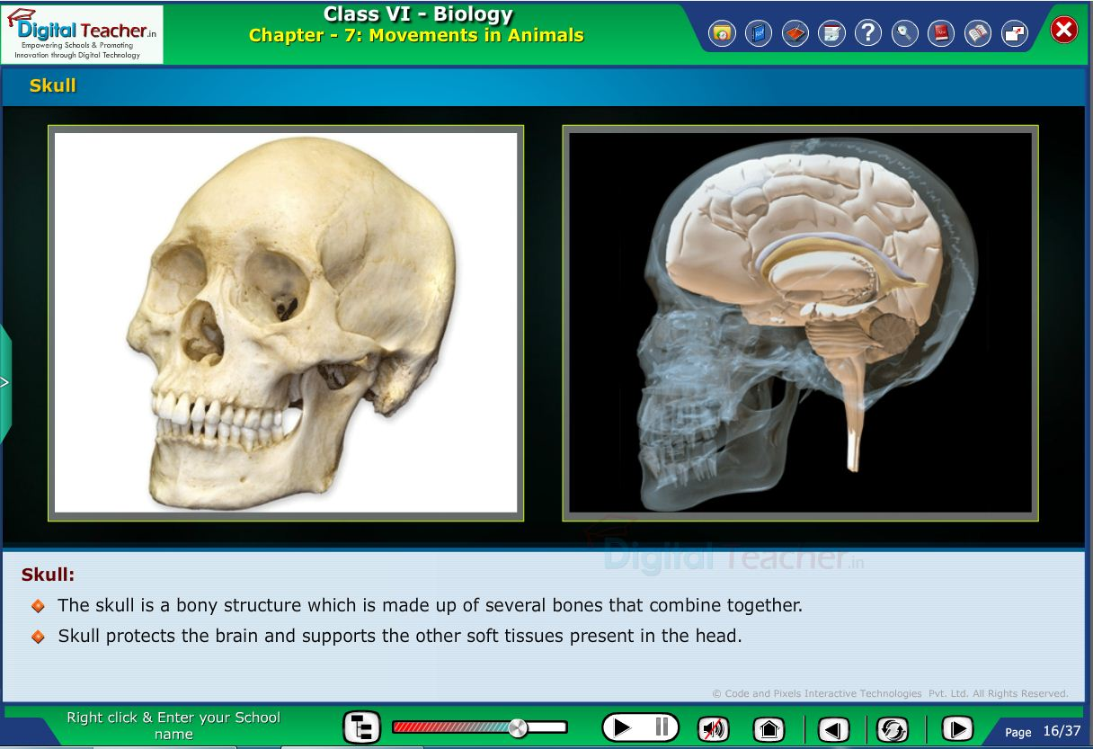 Digital teacher smart class about skull of the human being