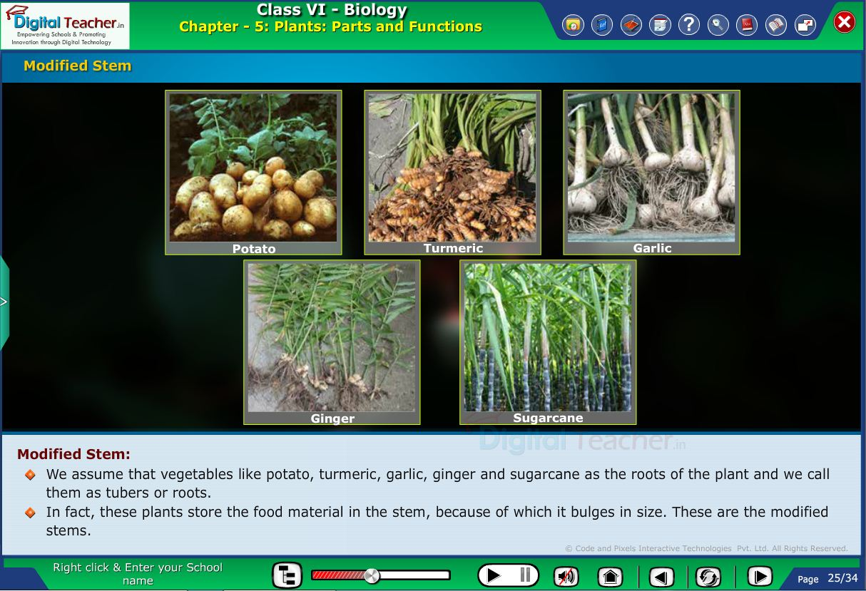 Digital teacher smart class about main body of different plants