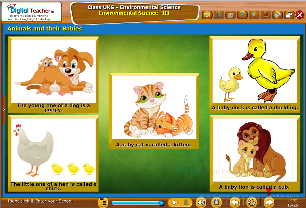 Animals and their Babies