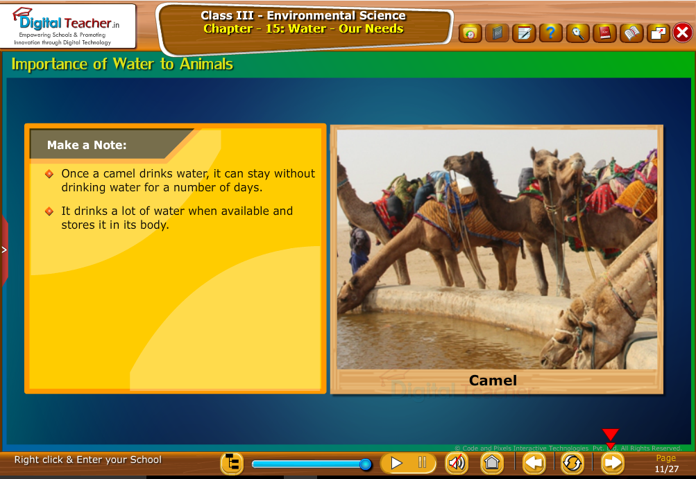 Importance of water to animals