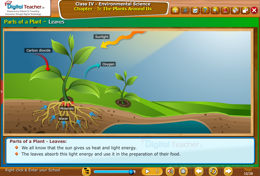 Parts of plant -leaves