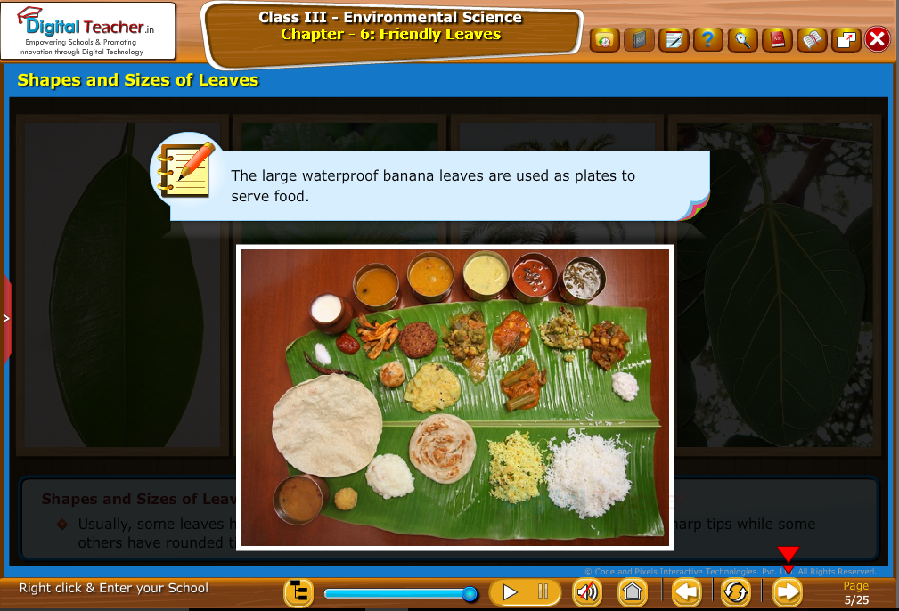 Shapes and sizes of leaves