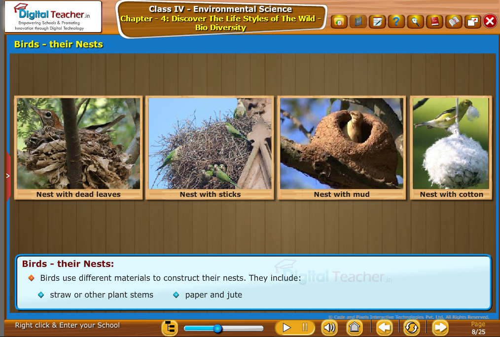 birds their nest