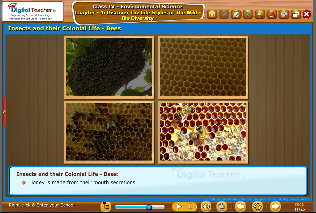 insects and their colonial life