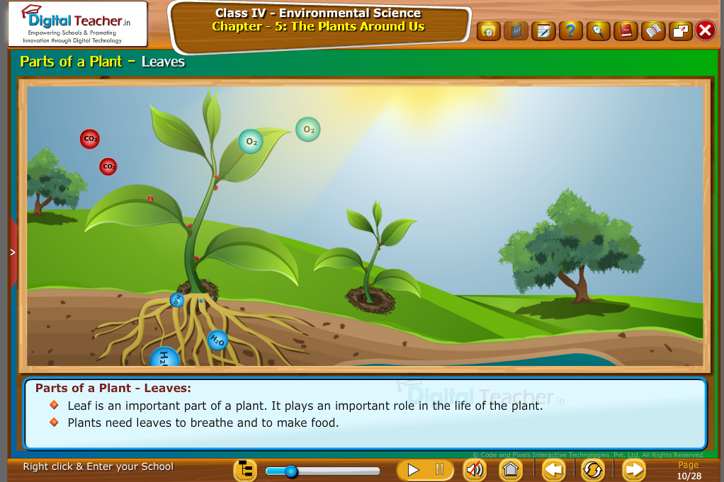 part of plant- leave