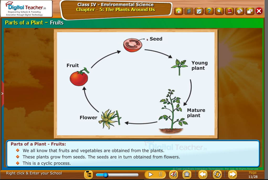 prats of plant--fruits