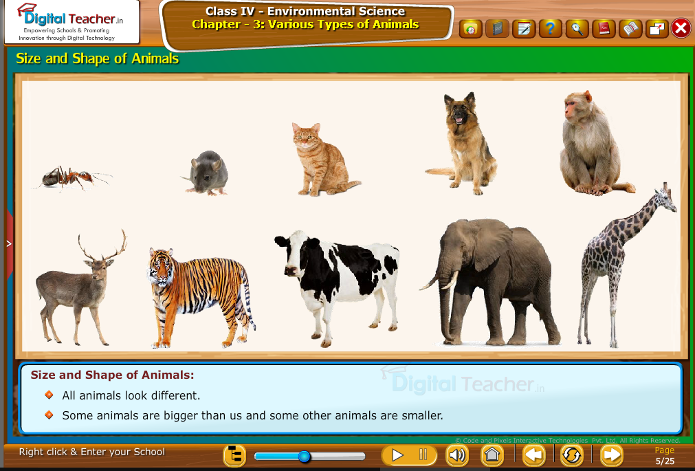 varous animals